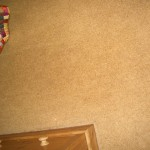 Unstained Beige Carpet